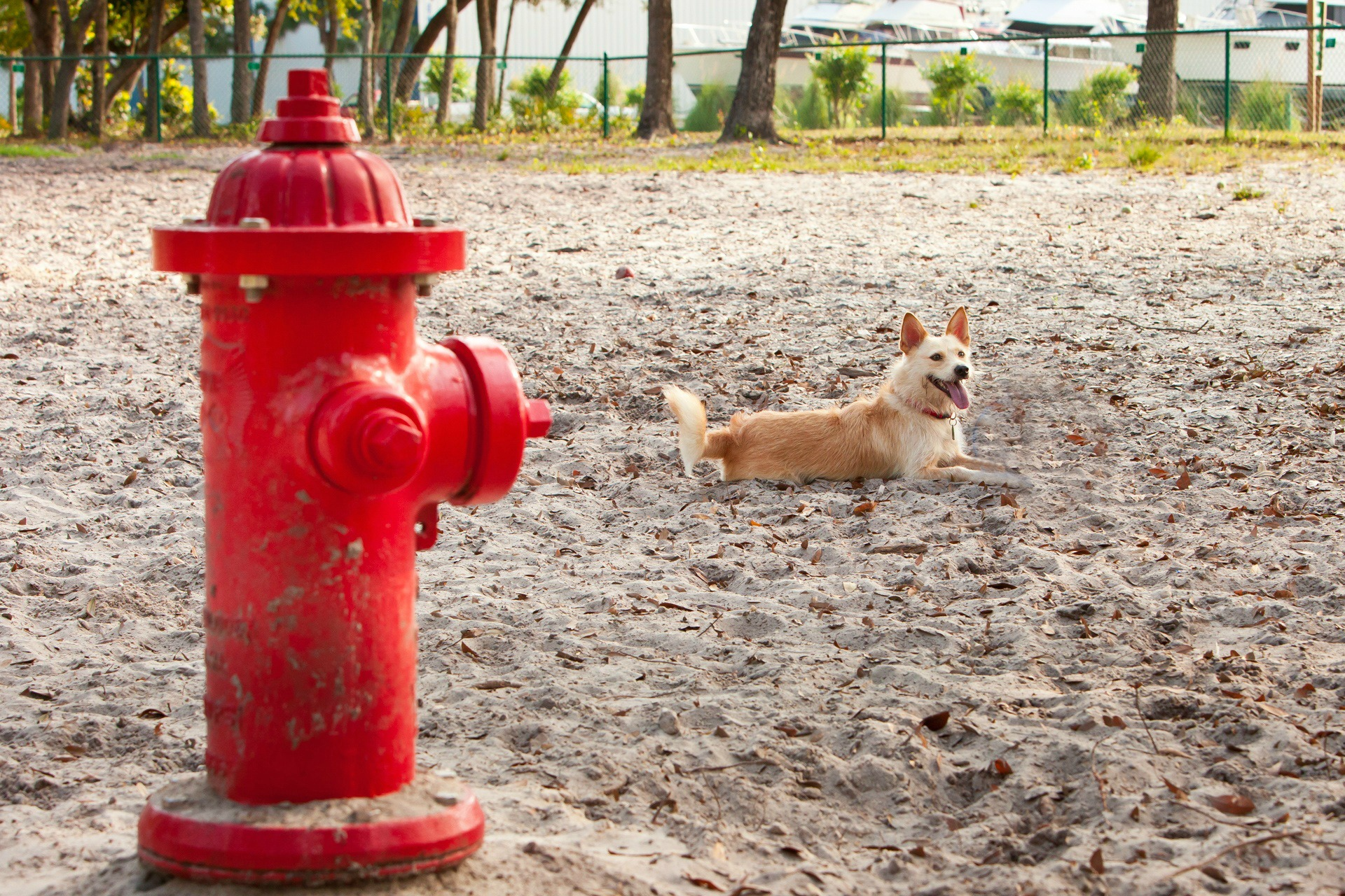 Why Do Dogs Lift Their Leg To Pee Fetchfind Blog