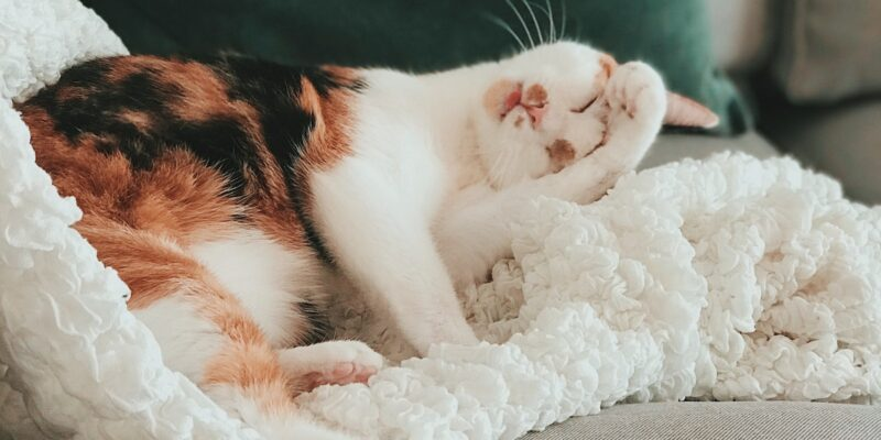 10 signs of a happy cat