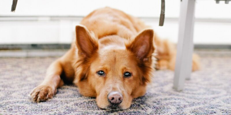 dog noise anxiety treatments