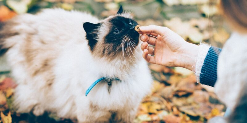 10 essential cat care supplies