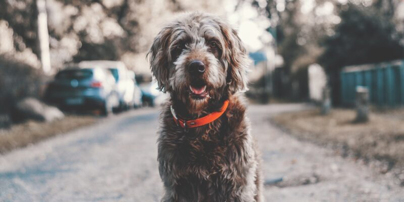 Here are the common signs of aging in dogs