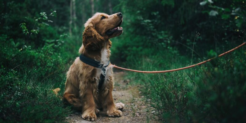 Here are the top signs of joint pain in dogs