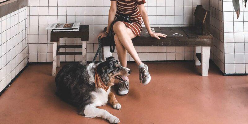 pet business staff training